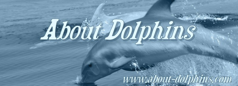 About Dolphins