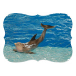 Dolphin Pose Card