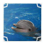 Lovable Dolphin Tile