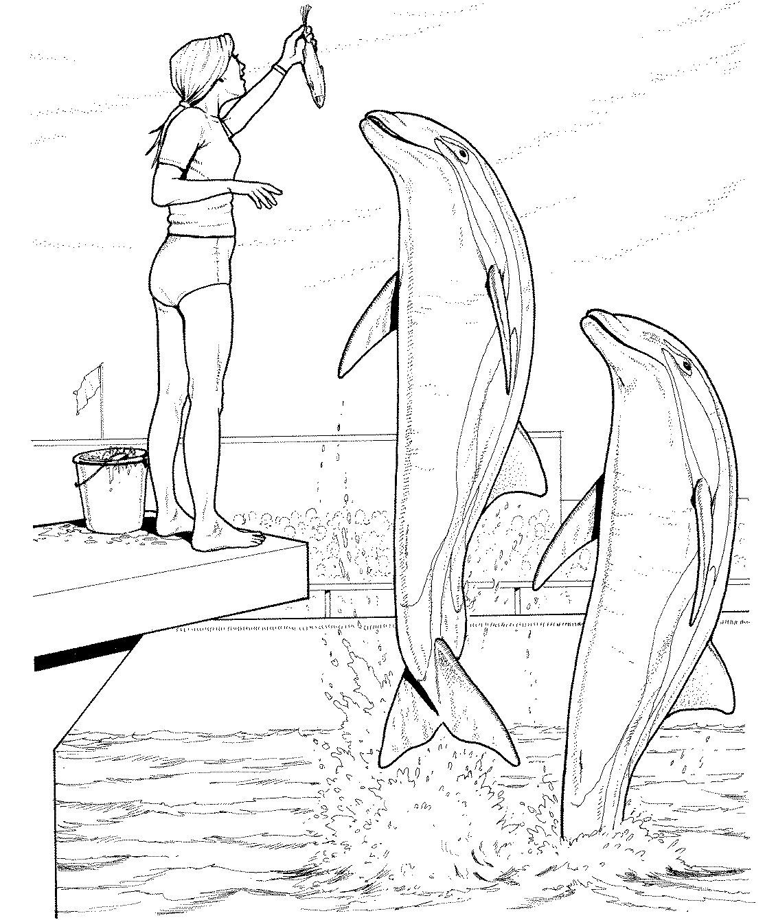 e coloring pages for dolphins - photo #19