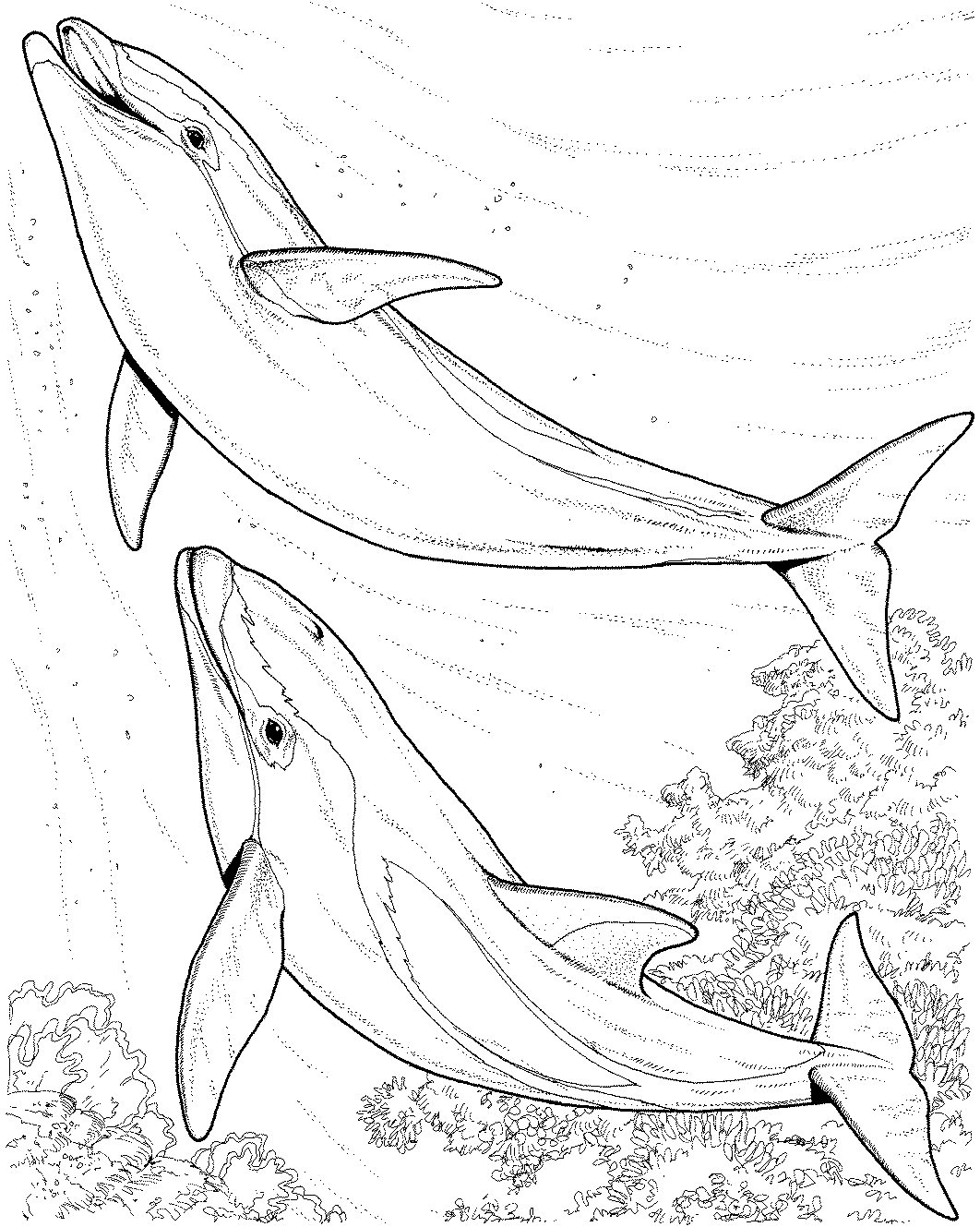 Free Coloring Pages Of River Dolphin