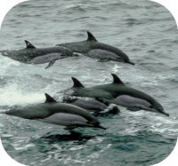 Dolphin Pod Picture